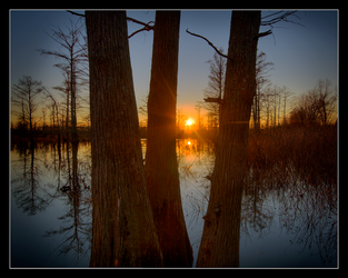 Sunset Through Cypress by Karl-B