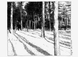 Reproduction - Woodland by AntoineRozel