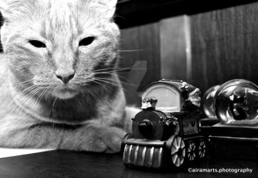 Cat and Miniature Train by airamarts