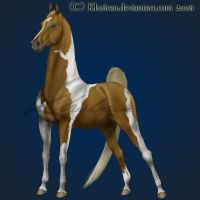 Pinto Saddlebred by Kholran