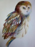 Northern Saw whet Owl by Ashenjay