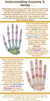 Understanding Anatomy 2: Hands by AsharaNi