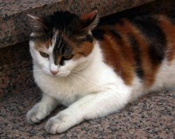 A cat by UdoChristmann