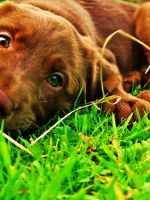 My Playful Puppy by Turlach