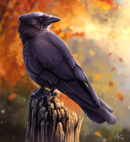 Autumn Crow by Atropicus
