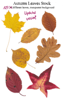 Autumn Leaves Stock Package (Update!) by Kampfkewob
