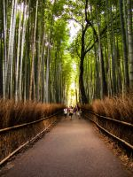 3989 bamboo forest by FubukiNoKo