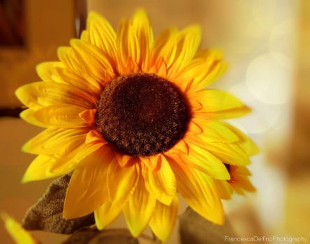 Sunflowers II by FrancescaDelfino