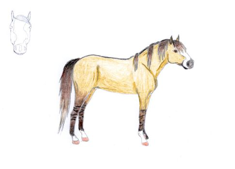Request Horse by ratimo