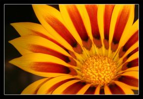 Flower Close-up by Anglo-Saxon