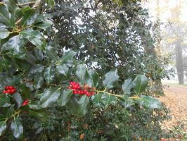Holly stock 1 by LittleOph