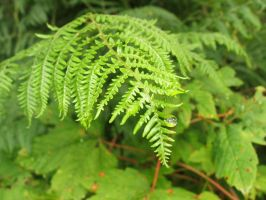 Fern with Drop by s8472