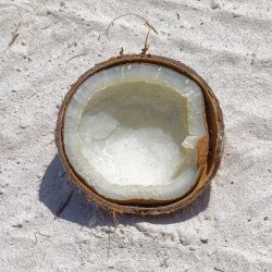 Abandoned coconut by sequential