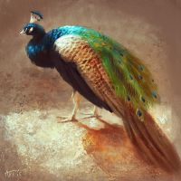 A Peacock by Leffsha