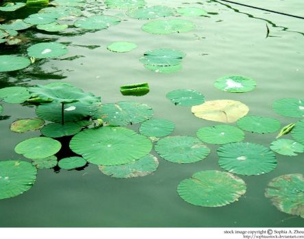 stock 745: lily pads by sophiaastock