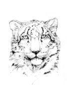 Snow Leopard by LittleTelli