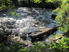 Sunny Creek by Rylius