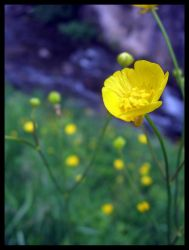 Yellow flower by Evil1302