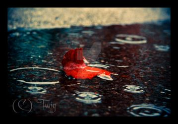 Alone with the Raindrops by TwiggyTeeluck