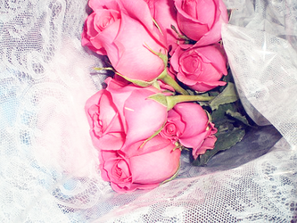 Pink Roses by frostedhearts