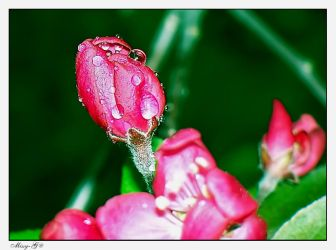 Dew Drops by MelissaGriffin