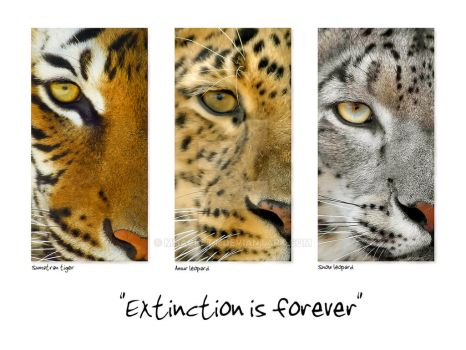 Extinction is forever by mhackett
