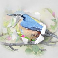 Torn Paper Photo Sketch by GraphicAssets