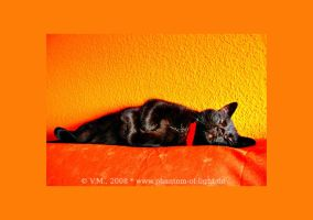 ::2660:: sleeping cat by Phantom-of-light