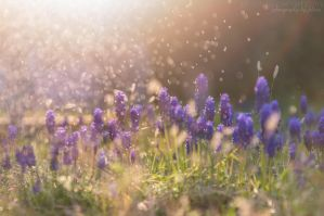 A tale of spring and its weather - Part III by FeliDae84