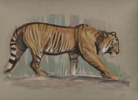 Tiger by Hungry-Porkins