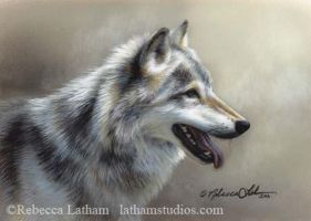Mist of Light - Timberwolf by rebeccalatham