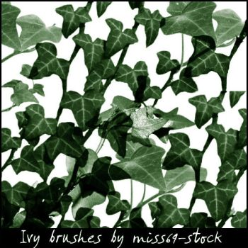 Ivy Brushes by miss69-stock