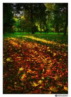autumn colours by adypetrisor
