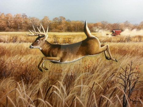 High Tailing It, White tailed Deer Buck