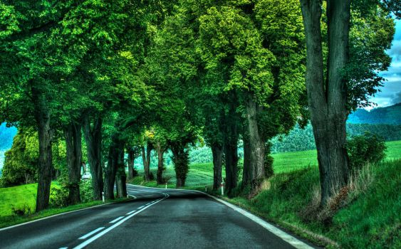 Road under trees by Samuels-Graphics