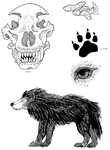 Andean Wolf Spot Illustrations by Kway100