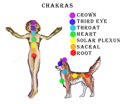 Chakras for Quadrupeds and Bipeds Human Wolf Horse by StephanieSmall