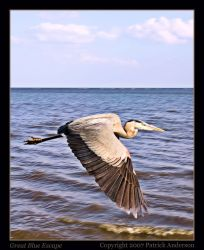 Great Blue Escape by renaissanceman3
