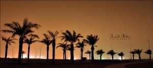 Palms by Ahmed-Abdan