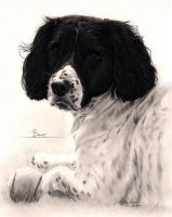 Commission - Springer Spaniel and ball by Captured-In-Pencil