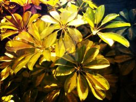 leaves by Duophased