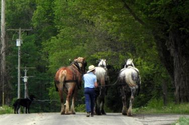 Walking the Horses by dmguthery