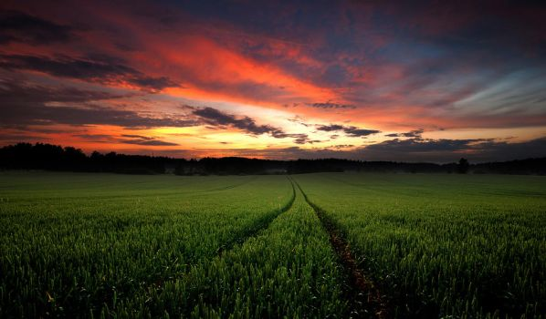 Field At Sunset by comsic