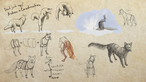 Form study 002 - Foxes by goodsirxv