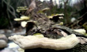 mushrooms on tree by ArisAnthopoulos