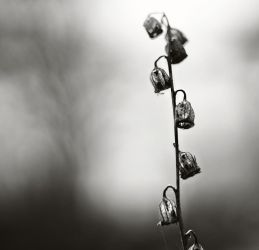 The sound of silent bells by Peterix