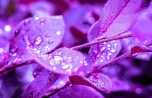 Purple Rain by HannahDoma