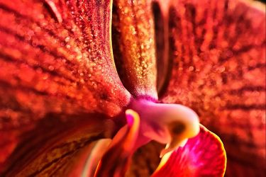 Orchid by stofo