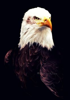 Commission -Bald Eagle by Sorina-chan