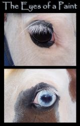 The Eyes of a Paint by Lovely-DreamCatcher